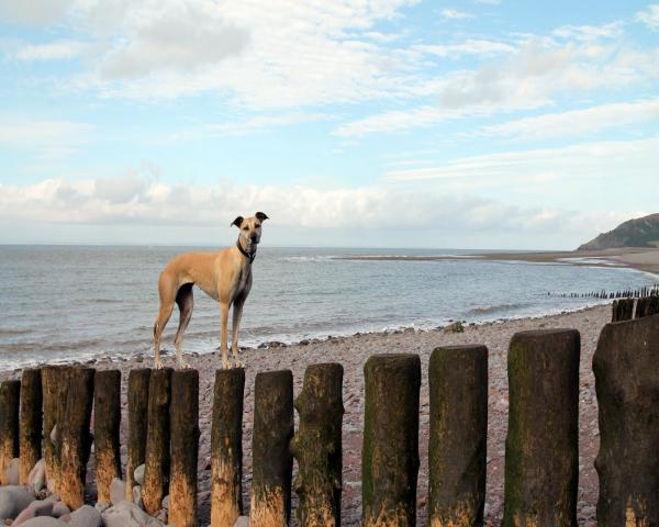dog friendly accommodation exmoor
