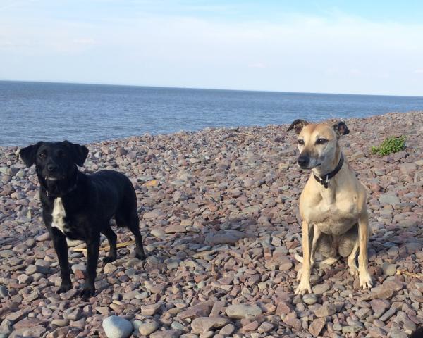 dog friendly cottages devon, devon dog friendly cottages, cottages in devon dog friendly, dog cottages devon, holiday cottages devon pets