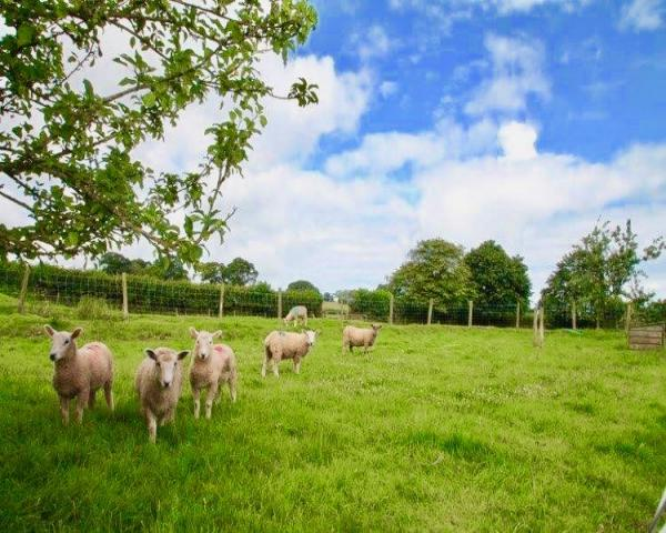 Farm holiday cottages devon