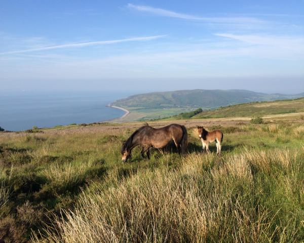 new self catering cottages exmoor, exmoor self catering deals, best price exmoor holiday cottages