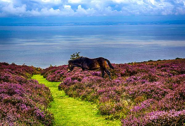early may bank holiday, may day bank holiday, exmoor may day, somerset holiday may