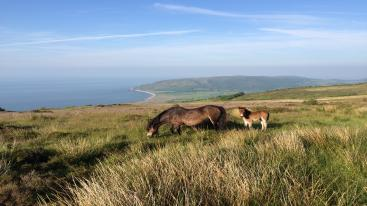 Stay in Exmoor