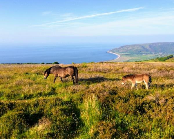 stay in exmoor national park, holiday cottages in exmoor national park, exmoor national park places to stay, places to stay in exmoor national park, exmoor national park holiday, accommodation exmoor national park, exmoor national park hotels, exmoor national park b&b,
