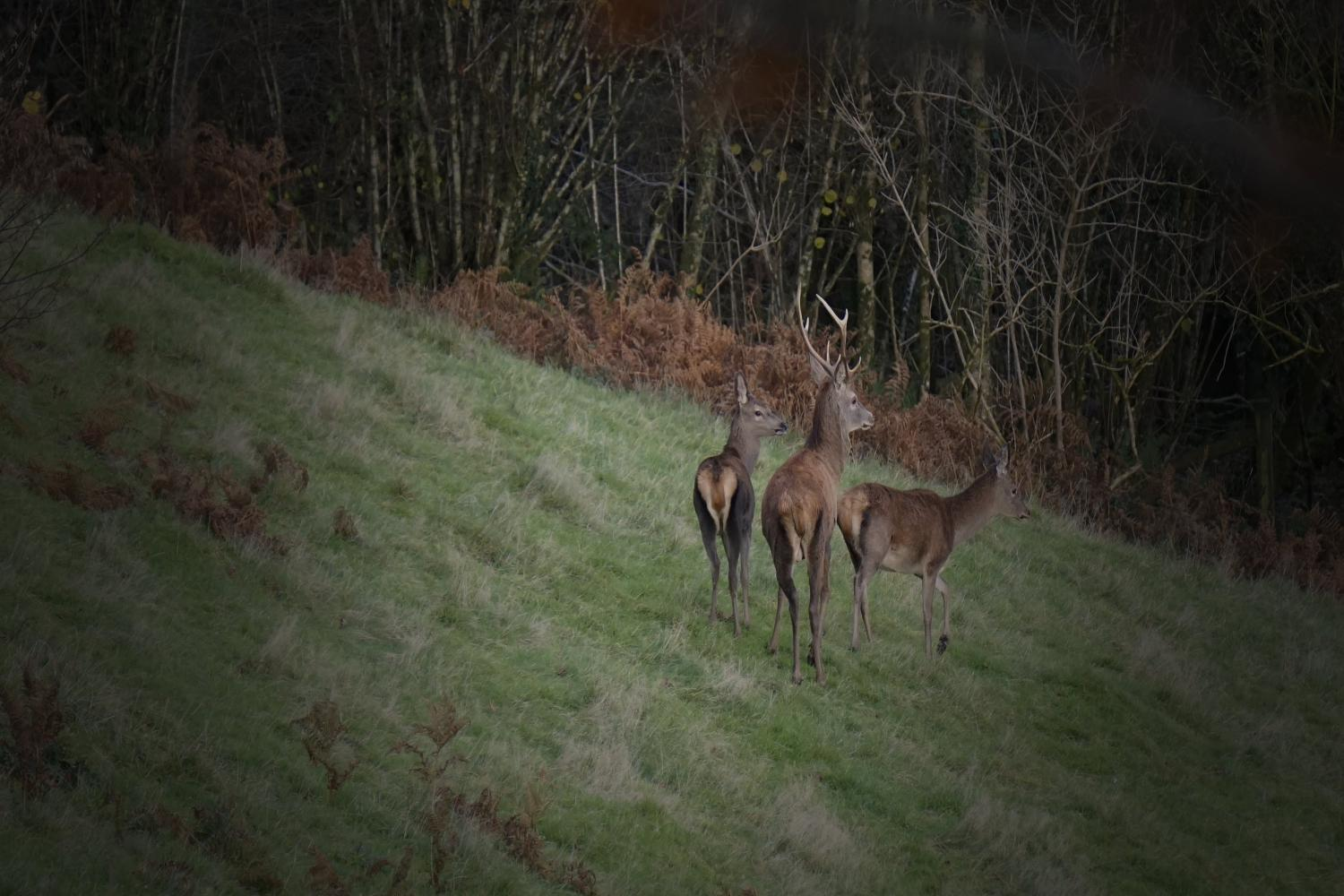 Deer spotting in the forest
