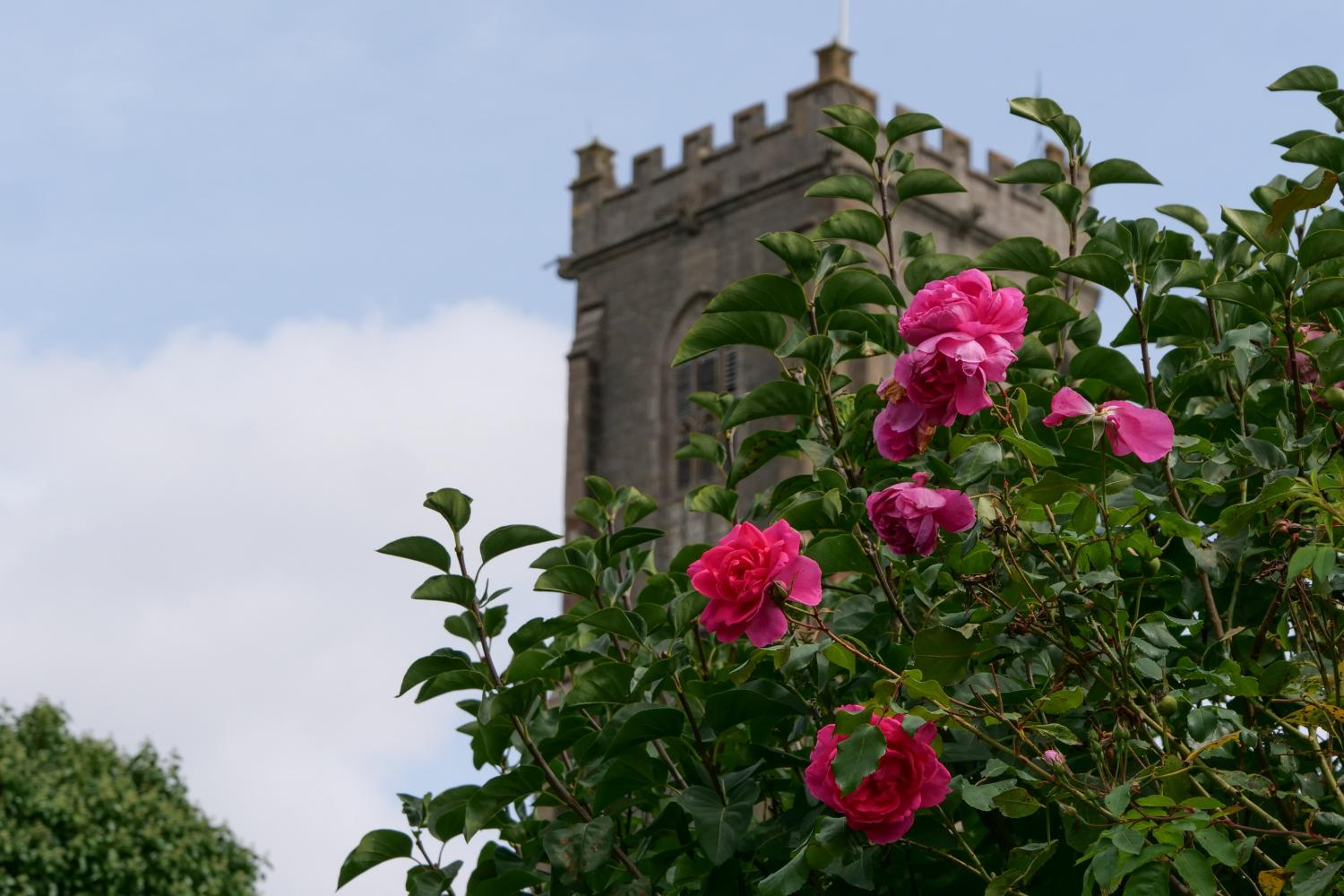 Views to the church from the garden