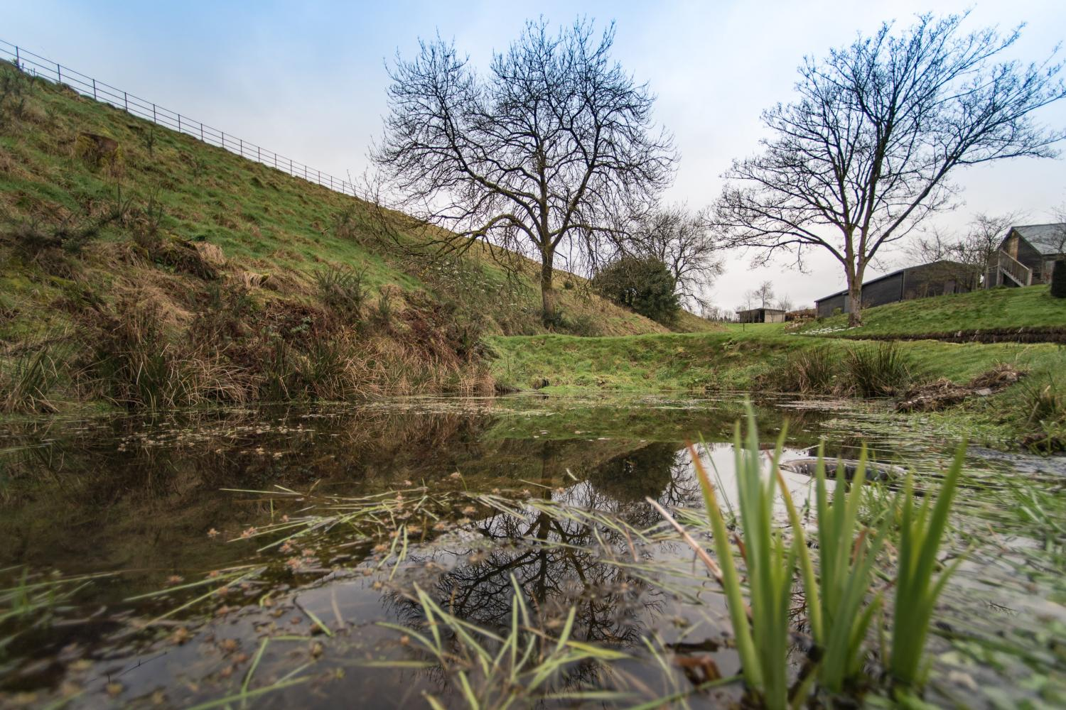 Pond on the approach to The Cow Shed