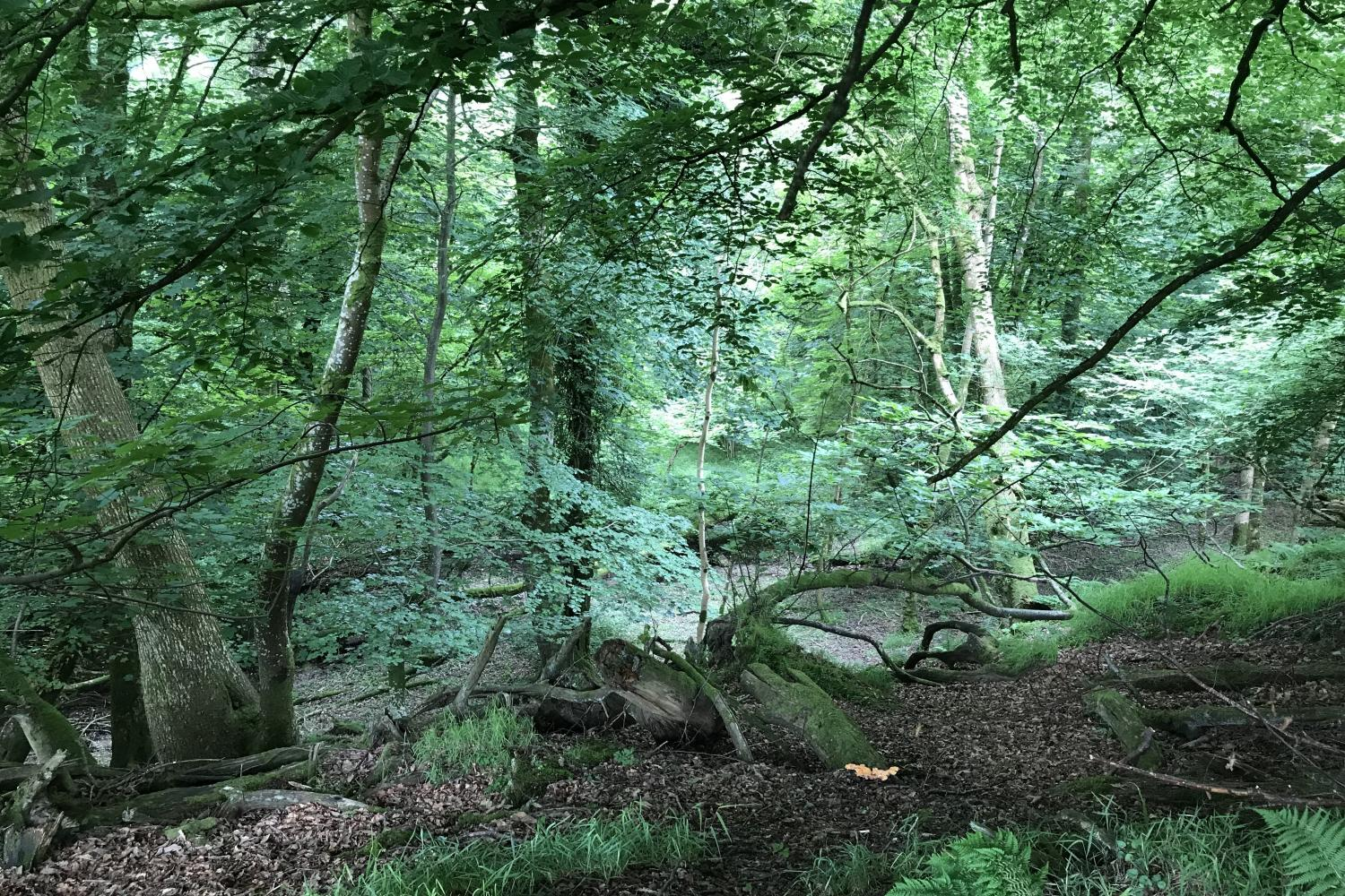 Ancient woodland at Stolford Farm